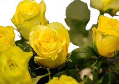 Růže žluté 45,-
