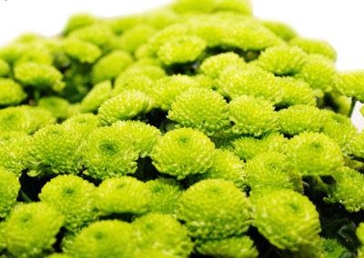 Santini zelené 35,-