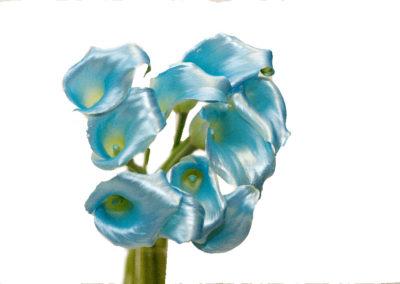 kaly Satin blue 99,-